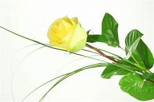 Gelb Rote Rosen Bedeutung : gro e gelbe rose basic rosenbote ~ Whattoseeinmadrid.com Haus und Dekorationen