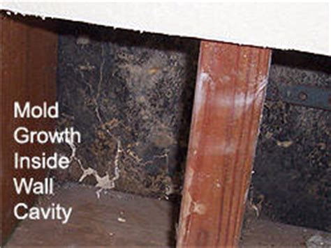 property damage caused by mold in los angeles