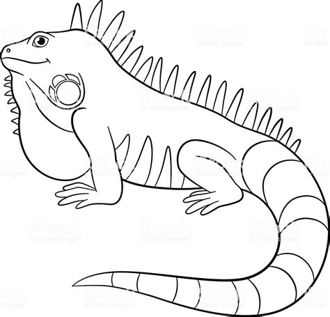 Coloring Iguana by Iguana Coloring Pages Coloring Pages
