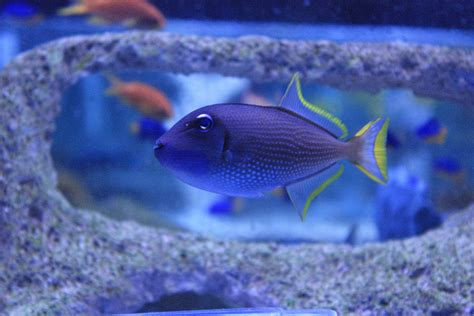 absolutely fish  popular large marine fish bought