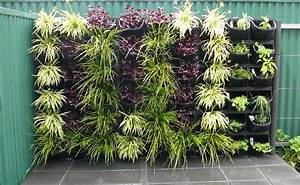 Vertical Gardens Adelaide: Feature Walls For Small Gardens