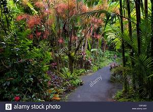 Pathway in hawaii tropical botanical gardens hawaii the for Hilo botanical gardens