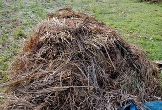 membuat kompos kotoran sapi kambing jerami