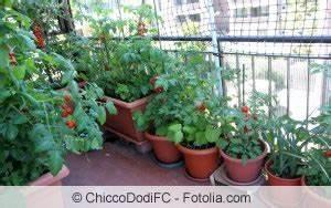 Tomaten Balkon Kübel : gem se auf dem balkon anbauen gem seanbau in balkonk sten ~ Yasmunasinghe.com Haus und Dekorationen