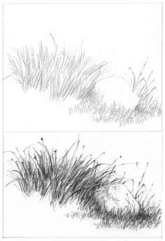 drawing grass  weeds tutorial  diane wright drawing