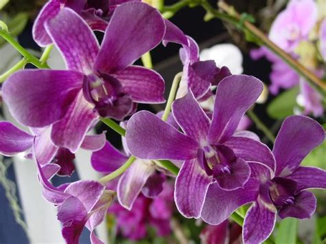 types of orchids types of purple orchids orchid flowers