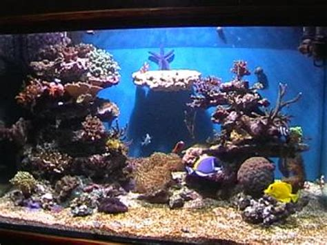 comment faire un aquarium d eau de mer exemple d 233 cor fond aquarium recifal