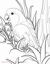 Coloring Parrotlet Conure Sun Pages Drawing Budgie Fun Popular sketch template