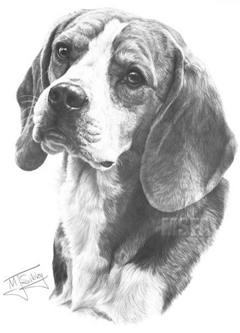 beagle fine art dog print  mike sibley