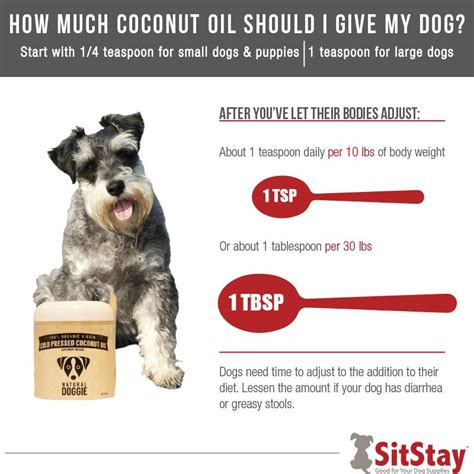 coconut oil  dogs  ultimate guide