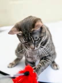 Animal Shelter Adopt a Cat
