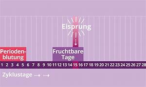 Tag Der Zeugung Berechnen : fruchtbare tage berechnen eisprungrechner ~ Themetempest.com Abrechnung