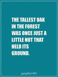 10 Inspirationa... Forest Floor Quotes