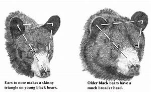 Bear Hunt Techniques