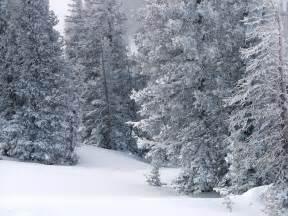 Colorado Winter Snow Scene Trees