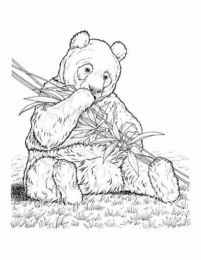 Coloring Pages Animals Endangered Species Zoology Journal