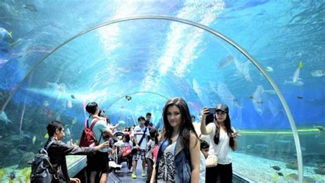 aquariums  visit  kids   world