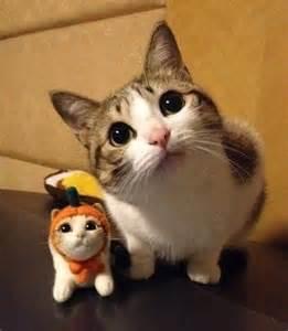 mini cat is this mini me giantgag