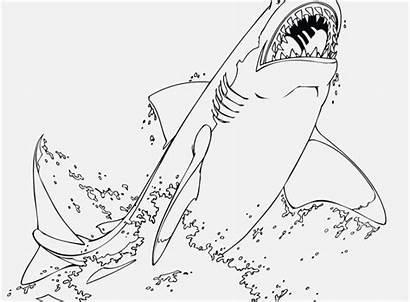 Shark Coloring Pages Adults Getcolorings Printable Getdrawings