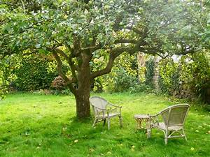 Green Apple Tree - Bing images