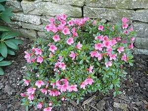 Petit Arbuste Fleuri : notre jardin secret un week end de p ques ~ Premium-room.com Idées de Décoration