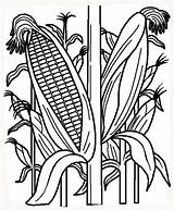 Corn Coloring Stalk Indian Template Field Stalks Fall Cornfield Cornstalk Printable Plant Vegetables Farm Sheet рисунок кукуруза Fruits Planting Vegetable sketch template
