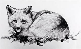 Fox Drawing deviantART
