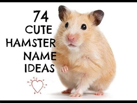 hamster names cute hamster names www pixshark com images galleries with a bite