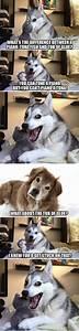 Pun Dog Husky Blank