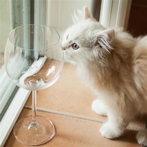 wine for cats wine for cats pinot meow and moscato non alcoholic