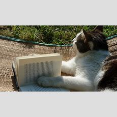 10 Musthave Cat Books For Your Collection  Catcon 2019