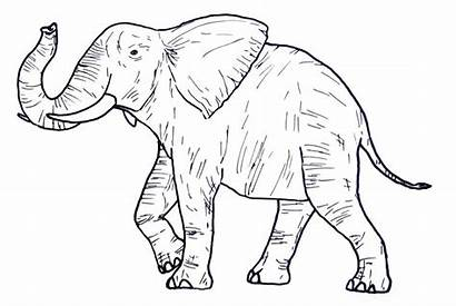 Coloring Animal Wild Pages Elephant