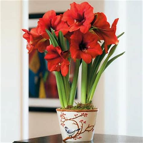 10 christmas or holiday plants for your home christmas gifts