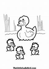 Duck Ducks Baby Pond Colouring Coloring Pages Drawing Clipart Theme Getdrawings Mommy Printable sketch template