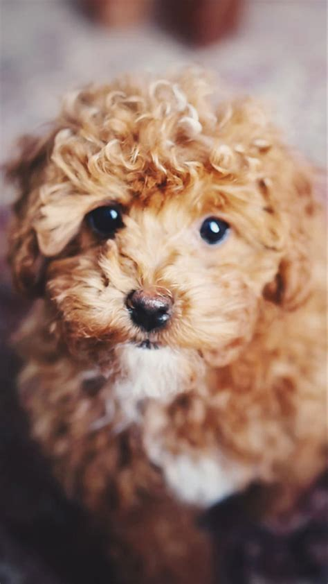 Cute dog wallpapers for free download. Cute Dogs HD Wallpapers for Moto G4 Plus | Wallpapers.Pictures