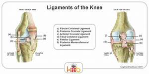 King Brand Knee Images