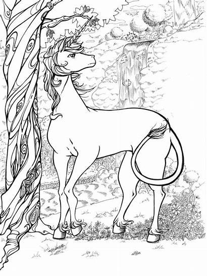 Coloring Pages Unicorns Unicorn Horn Horse Word