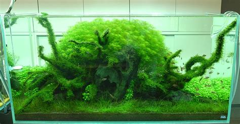 amano aquascape interior design ideas