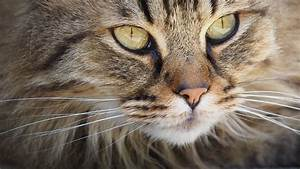 Was Hilft Gegen Wespennest : was hilft gegen fremde katzen hausmittel und tipps ~ A.2002-acura-tl-radio.info Haus und Dekorationen