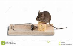 Mouse Trap With Cheese And Mouse Stock Photo