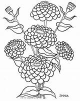 Coloring Pages Zinnia Flower Flowers Drawing Tulip Silhouette Pattern Goodall Jane Medium Getcolorings Getdrawings Printable Brod Fritzi Designlooter Embroidery Finds sketch template
