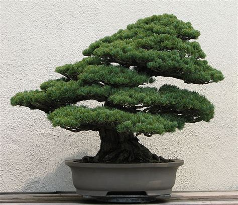 small japanese trees bonsai trees in japanese prints small is beautiful toshidama japanese prints