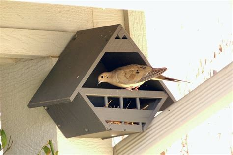 lovey dovey birdhouses