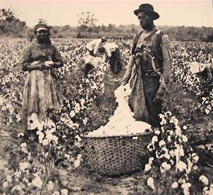 Slaves working in cotton fields | Slavery | Pinterest ...