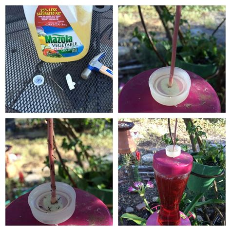 how to keep ants hummingbird feeder how to keep ants out of your hummingbird feeder without