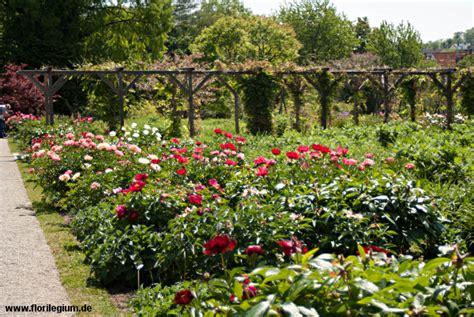 Sichtungsgarten Weihenstephan Bei Freising Florilegium