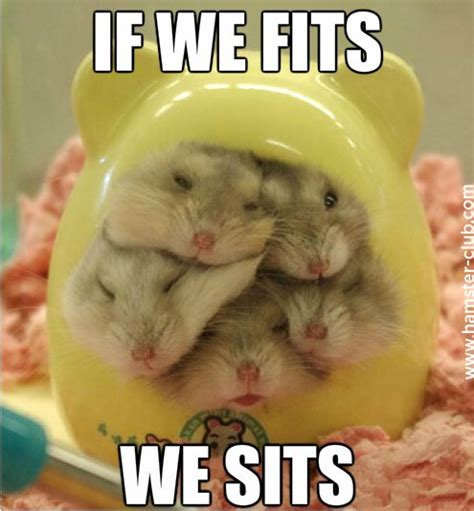 Hamster Meme - funny hamster memes hamster pinterest funny hamsters featuring and gerbil