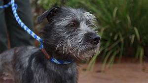 terrier mix with broken leg ready for adoption