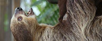 Archer Sloth