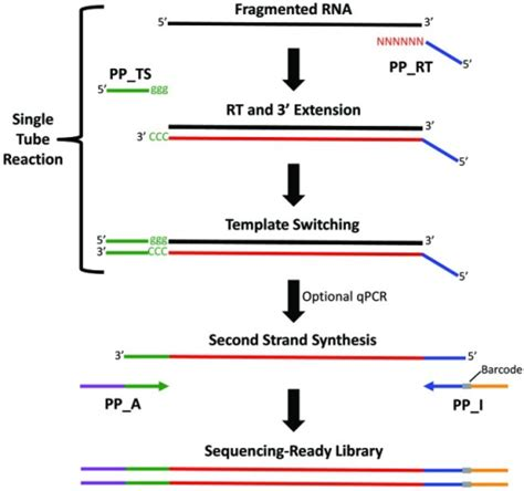 Figure 1. Overview of the Peregrine RNA-Seq library pr ...